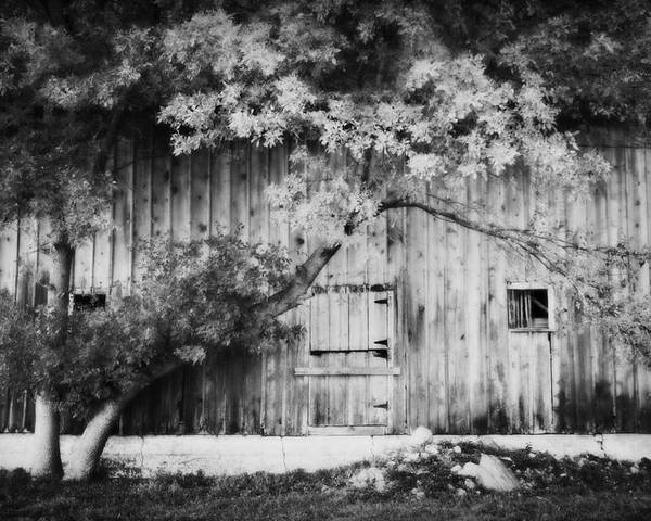 Barn Poster featuring the photograph Natures Awning Bw by Julie Hamilton