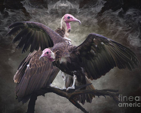 Vulture Poster featuring the photograph Natures Cleaners by Wobblymol Davis