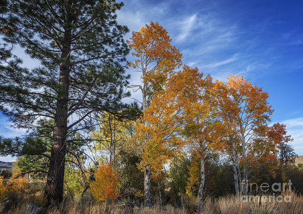 Trees Poster featuring the photograph Nevada Fall Colors by Dianne Phelps