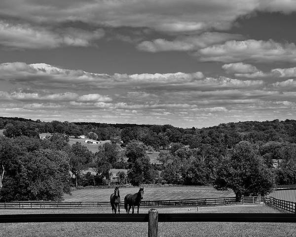 Hunterdon County Poster featuring the photograph New Jersey Landscape With Horses by Steven Richman