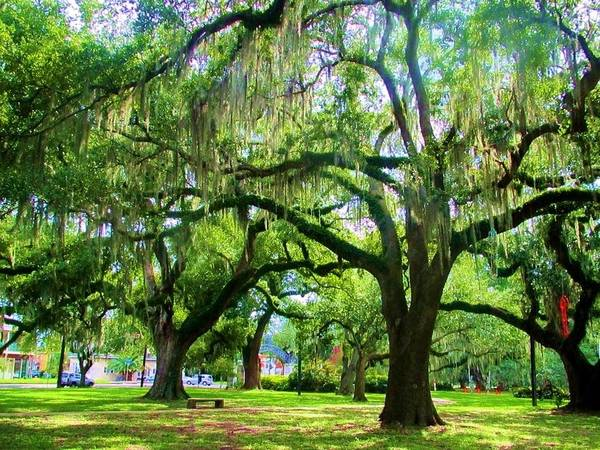 New Orleans City Park Poster featuring the photograph New Orleans City Park - Live Oak by Deborah Lacoste