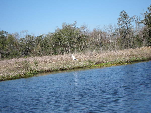 New Poster featuring the photograph New Orleans - Swamp Boat Ride - 1212119 by DC Photographer