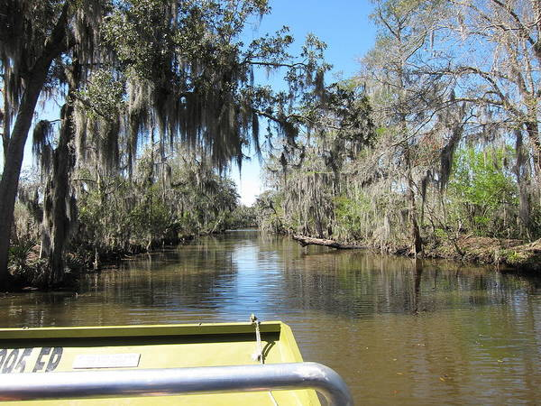 New Poster featuring the photograph New Orleans - Swamp Boat Ride - 1212123 by DC Photographer
