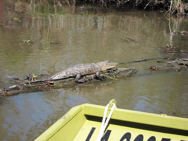 New Poster featuring the photograph New Orleans - Swamp Boat Ride - 1212160 by DC Photographer
