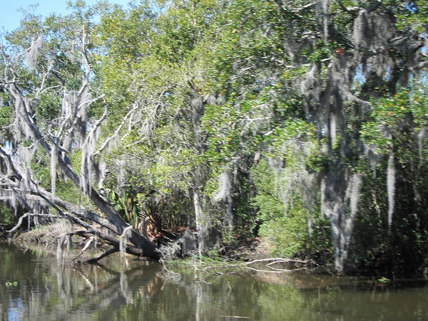New Poster featuring the photograph New Orleans - Swamp Boat Ride - 121231 by DC Photographer