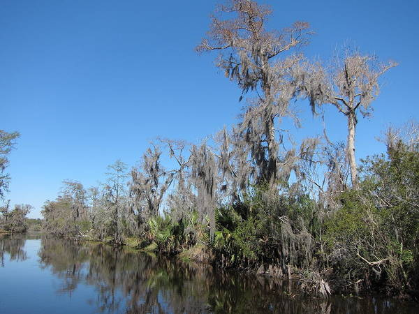 New Poster featuring the photograph New Orleans - Swamp Boat Ride - 121295 by DC Photographer
