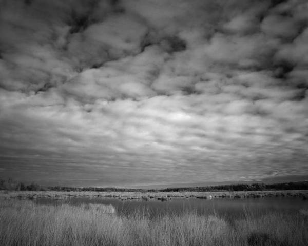 Infrared Poster featuring the photograph nfrared picture of the nature area Dwingelderveld in Netherlands by Ronald Jansen