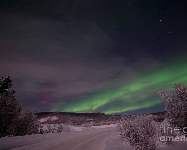 Snowy Poster featuring the photograph Night Skies by Priska Wettstein