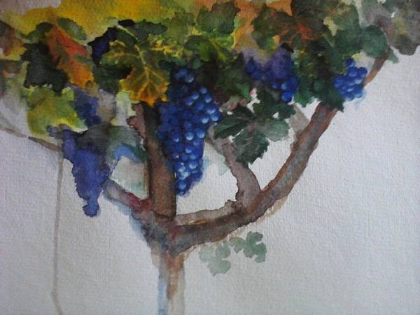 Vines Poster featuring the painting Noble Grapes by Susan Richardson-Kaumans