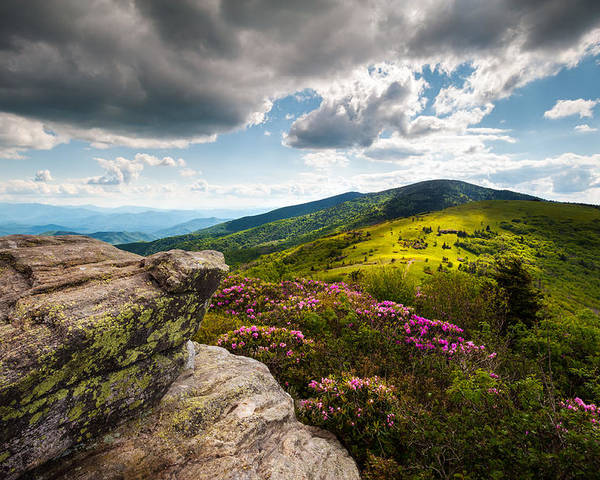 Roan Mountain Poster featuring the photograph North Carolina Blue Ridge Mountains Roan Rhododendron Flowers Nc by Dave Allen