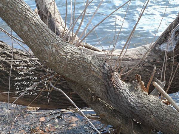 Scripture Poster featuring the photograph Not Forgotten by Kathy Hesterberg