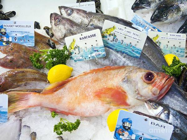 Ocean Perch Poster featuring the photograph Ocean Perch On A Fish Counter by Martyn F. Chillmaid