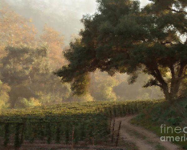 Ojai Poster featuring the photograph Ojai Vineyard by Kathleen Gauthier