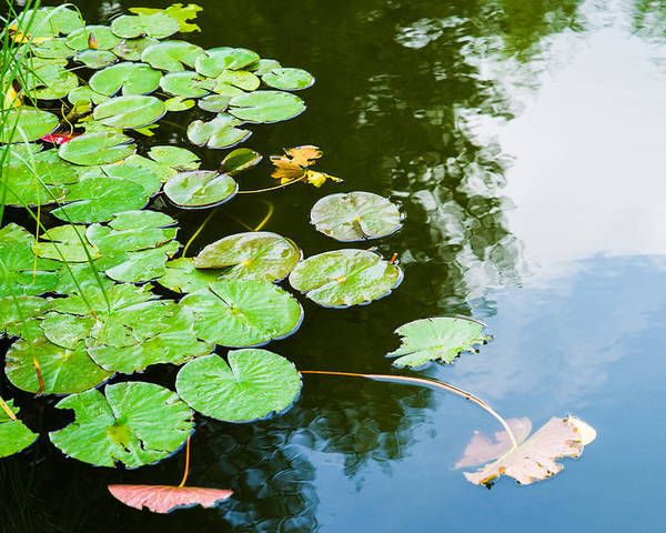 Aquatic Poster featuring the photograph Old Pond - Featured 3 by Alexander Senin