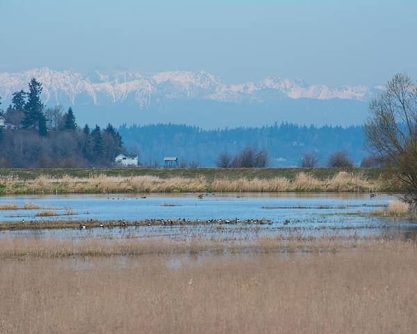 Nisqually National Wildlife Refuge Poster featuring the photograph Olympic View by Tikvah's Hope