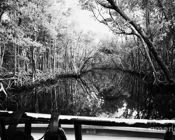 Airboat Poster featuring the photograph On Board An Airboat Ride Through A Mangrove Jungle In Everglades City Florida Everglades Usa by Joe Fox