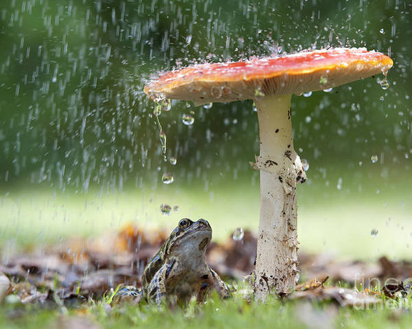 Frog Poster featuring the photograph One Rainy Day by Tim Gainey