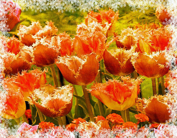 Tulips Poster featuring the photograph Orange Princess Fringed Tulips by Debra Miller