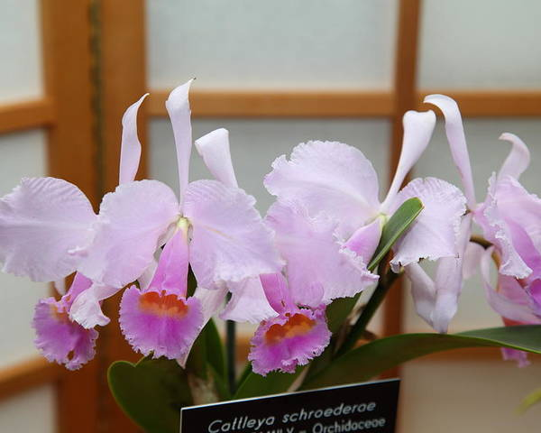 Washington Poster featuring the photograph Orchids - Us Botanic Garden - 011315 by DC Photographer