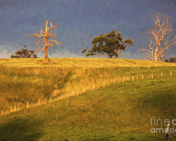 Dead Trees Poster featuring the photograph Paddock with dead trees at sunset by Sheila Smart Fine Art Photography