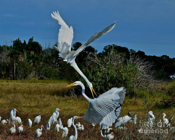 Great White Heron Poster featuring the photograph Pain In The Neck by AnnaJo Vahle