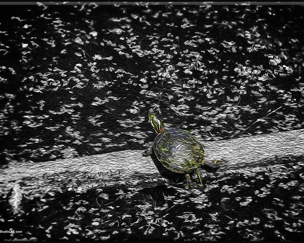 Usa Poster featuring the photograph Painted Turtle In A Monochrome World by LeeAnn McLaneGoetz McLaneGoetzStudioLLCcom