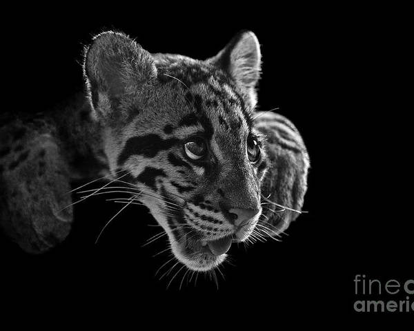 B&w Poster featuring the photograph Panting Beauty by Ashley Vincent