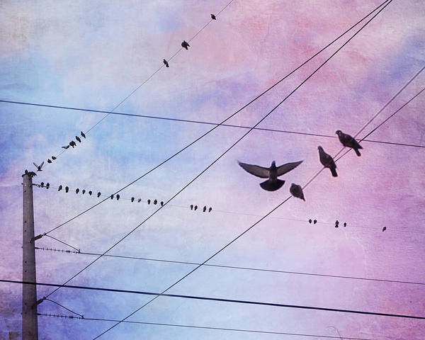 Birds On Wire Poster featuring the photograph Party Line by Amy Tyler