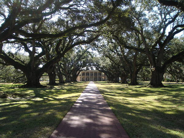 Plantation Poster featuring the photograph Pathway by Karla Kernz