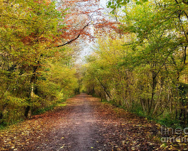 Leaf Poster featuring the photograph Pathway Through Sunlit Autumn Woodland Trees by Natalie Kinnear