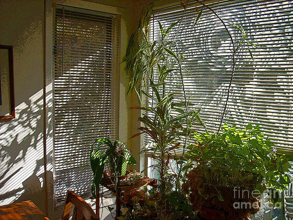 Plants Poster featuring the photograph Patterns in Light Through Dining Room Window by Beebe Barksdale-Bruner
