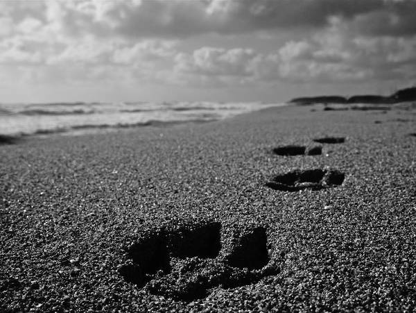 Paw Poster featuring the photograph Paw Prints In The Sand by Tracey McQuain