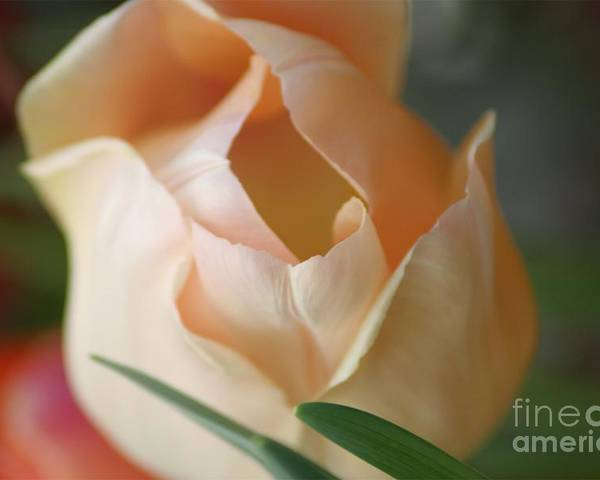 Floral Poster featuring the photograph Peach Harmony by Mary Lou Chmura