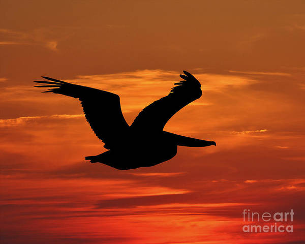 Pelican Silhouette Poster featuring the photograph Pelican Profile by Al Powell Photography USA
