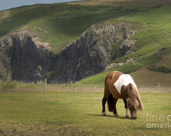 Pony Poster featuring the photograph Pembrokeshire by Angel Ciesniarska