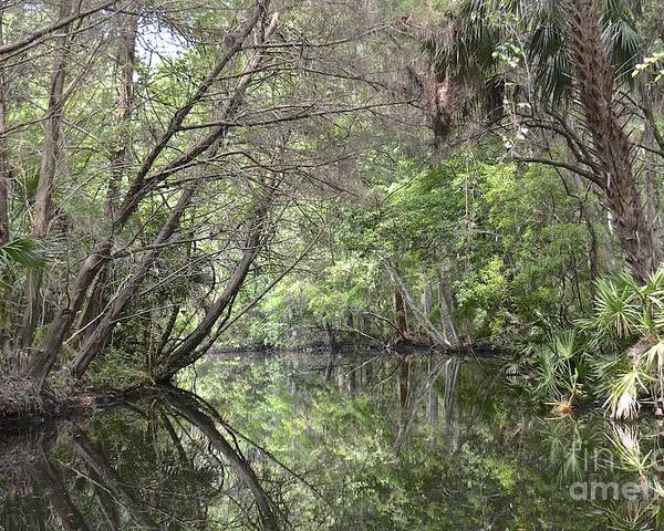 Creek Poster featuring the photograph Pepper Creek II by Carol Bradley
