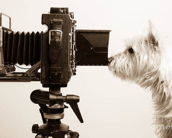 Westie Poster featuring the photograph Pho Dog Grapher by Edward Fielding