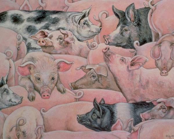 Pig Poster featuring the painting Pig Spread by Ditz