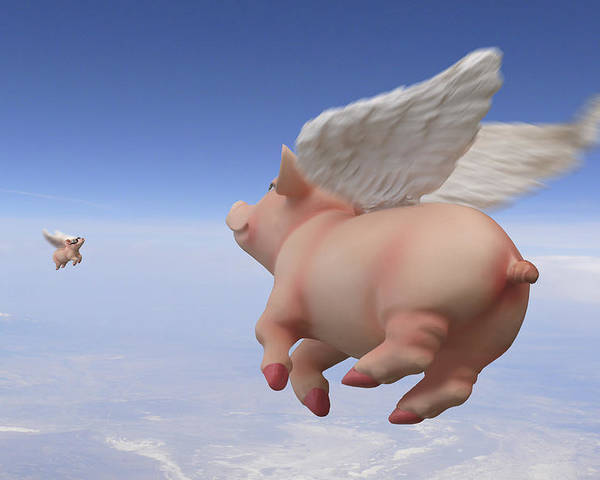 Pigs Fly Poster featuring the photograph Pigs Fly 2 by Mike McGlothlen
