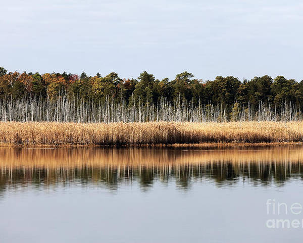 Pine Barrens Reflections Poster featuring the photograph Pine Barrens Reflections by John Rizzuto