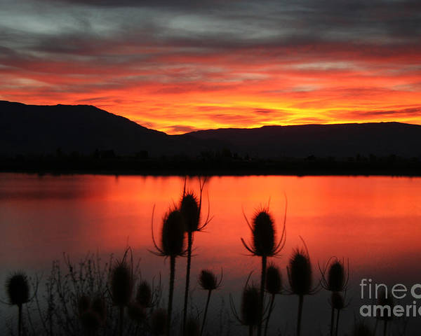 Pineview Poster featuring the photograph Pineview Dawn by Bill Singleton