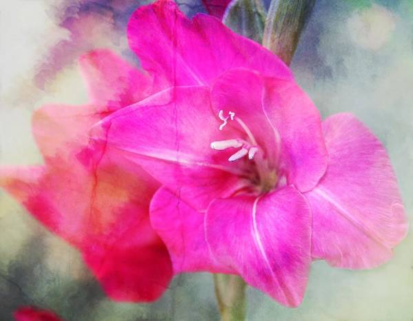 Gladiolas Poster featuring the photograph Pink In The Clouds by Cathie Tyler