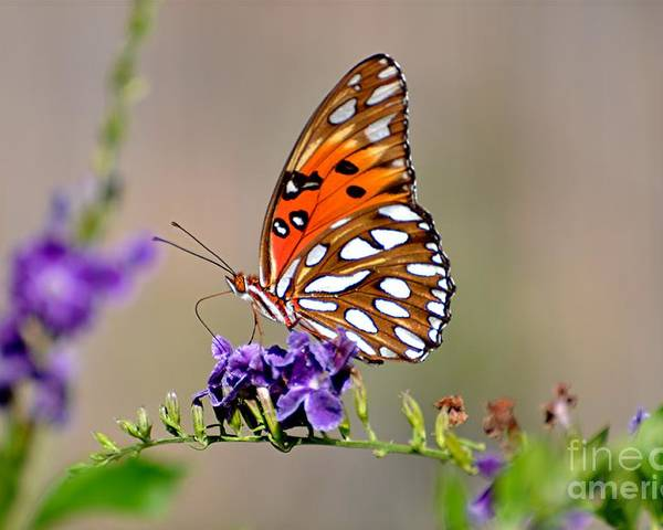 Butterfly Bush Poster featuring the photograph Plant It They Will Come by Davids Digits