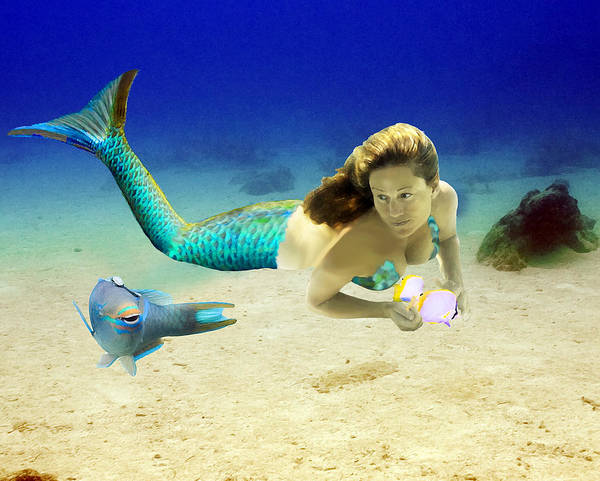 Mermaid Poster featuring the photograph Playmates by Paula Porterfield-Izzo