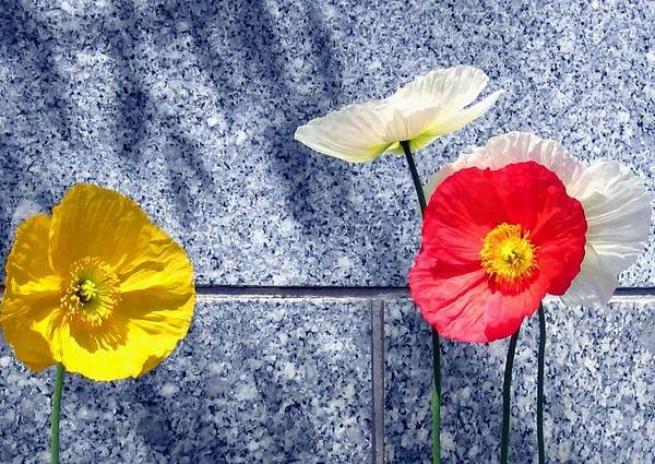 Poppies And Granite Poster featuring the digital art Poppies And Granite by Will Borden