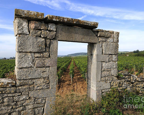 Agricultural  Poster featuring the photograph Portal Of Vineyard In Burgundy Near Beaune. Cote D'or. France. Europe by Bernard Jaubert