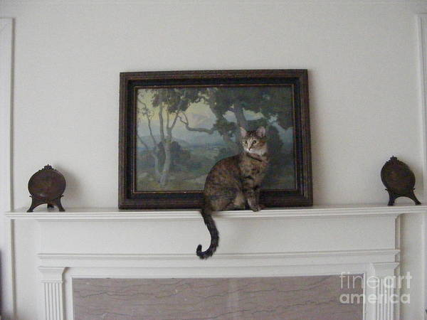She Is Quite The Model And Seems To Enjoy The Limelight. Poster featuring the photograph Portrait Of Feather by Nancy Kane Chapman