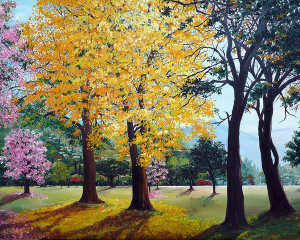 Tree Painting Landscape Painting Caribbean Painting Poui Tree Yellow Blossoms Trinidad Queens Park Savannah Port Of Spain Trinidad And Tobago Painting Savannah Tropical Painting Poster featuring the painting Poui Trees in the Savannah by Karin Dawn Kelshall- Best