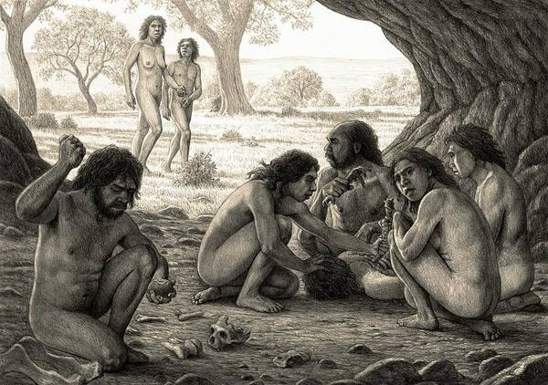 Homo Antecessor Poster featuring the photograph Prehistoric Cannibalism by Mauricio Anton/science Photo Library