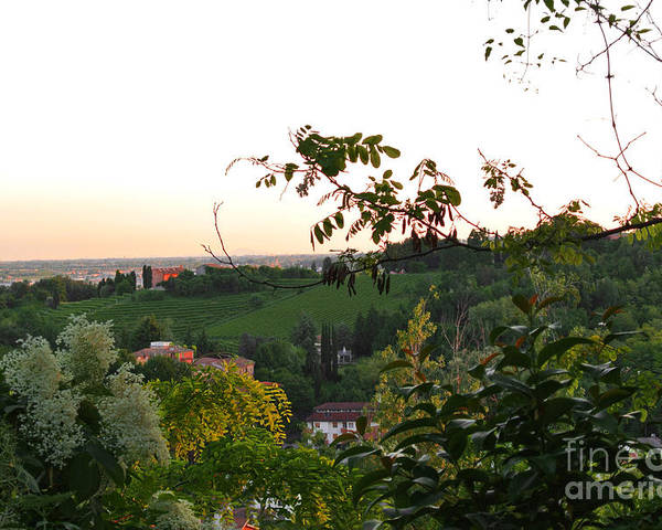 Vineyard Poster featuring the photograph Prosecco Vineyards by Sarah Christian